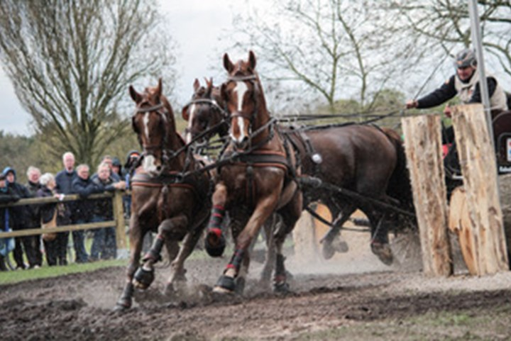 Internationale toppers naar Horse Driving Kronenberg