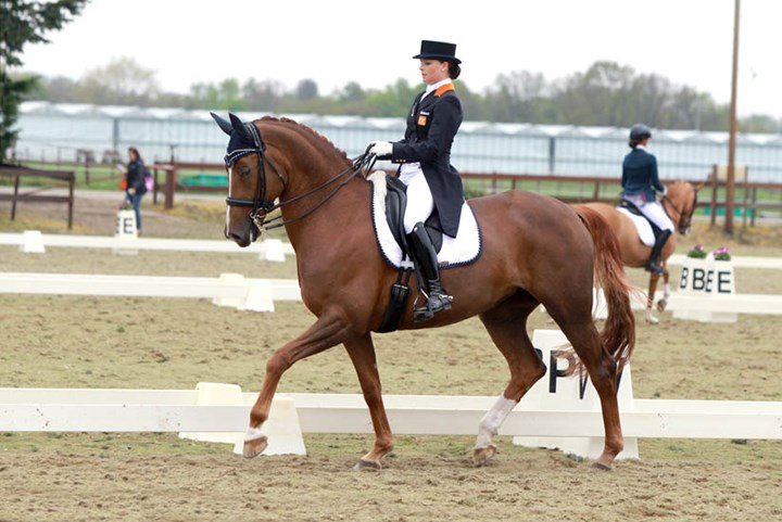 Anne Meulendijks wint KNHS-CHIO Rotterdam Cup Young Riders