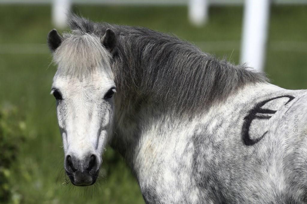 wat kost een paard