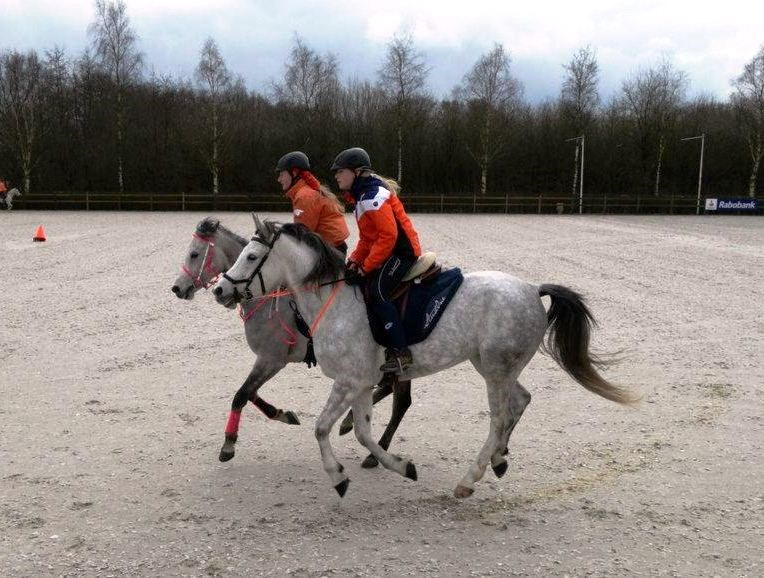 Audevard Next Endurance Generation traint in Ermelo