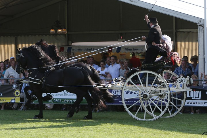 Drie NK's tijdens Tuigpaardenconcours Norg