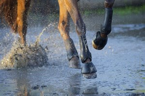 Verslag eventingforum 16 september 2015