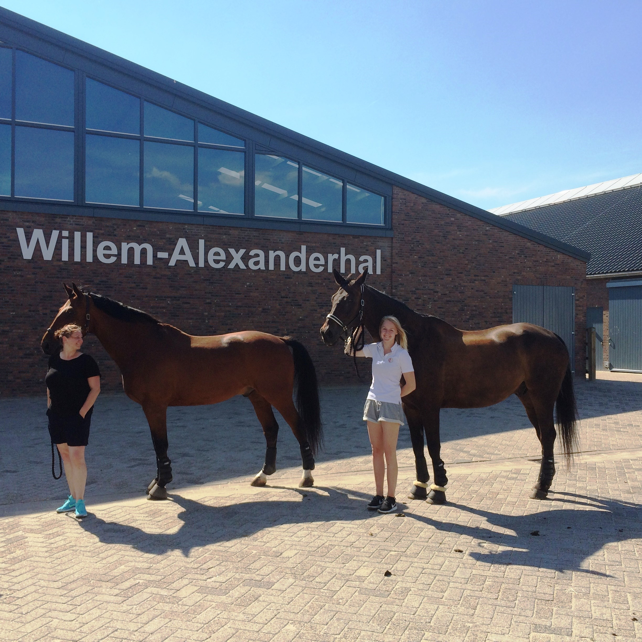 Internationale voltigepaarden arriveren in Ermelo