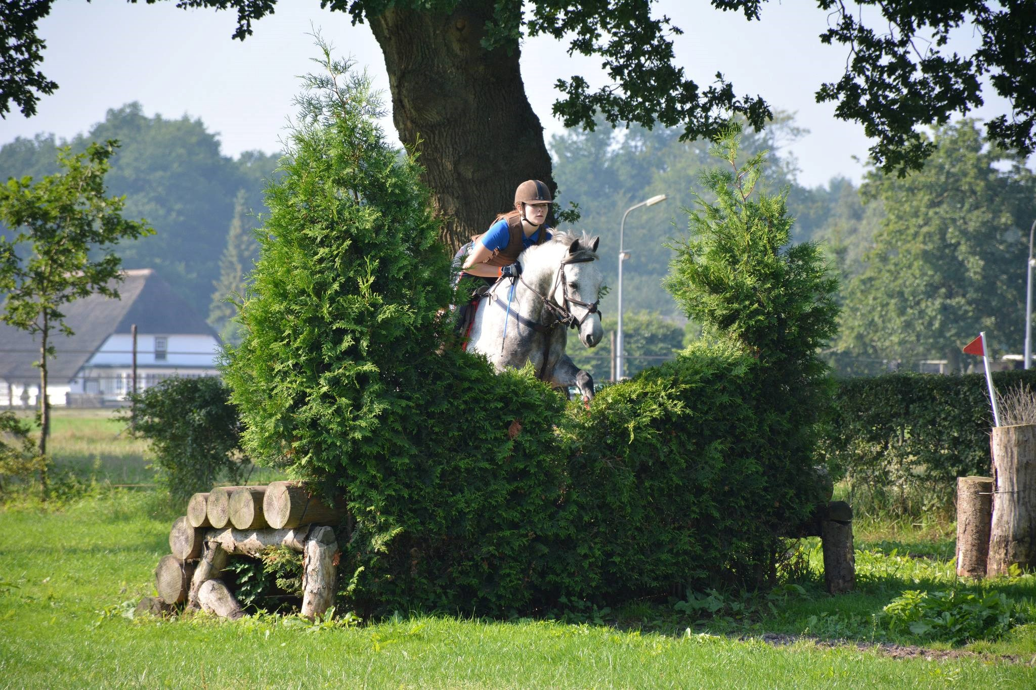 Zomerinstructieweken 2015:  week 10, Allround Pony's