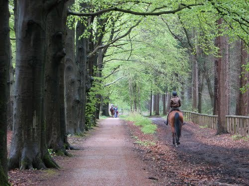 Paardenroutes